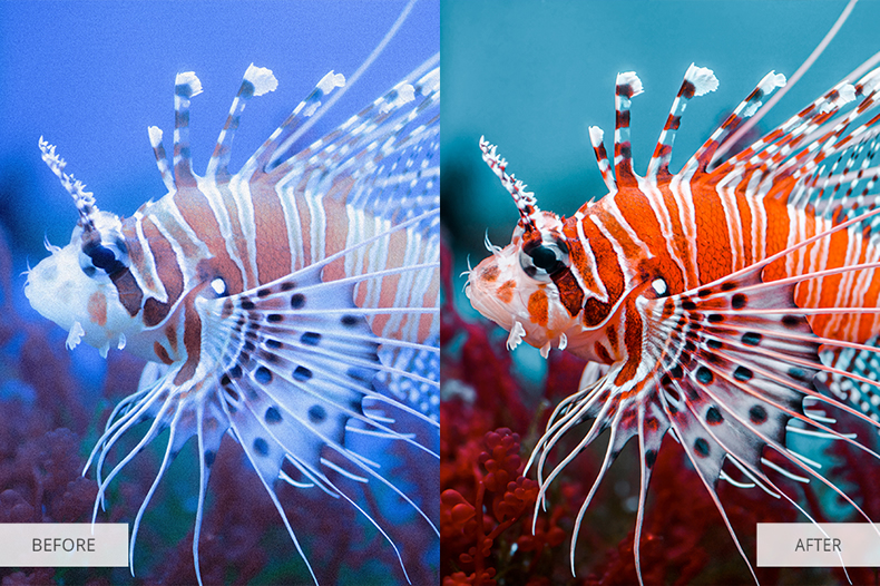 underwater-photography-collection-lightroom-presets