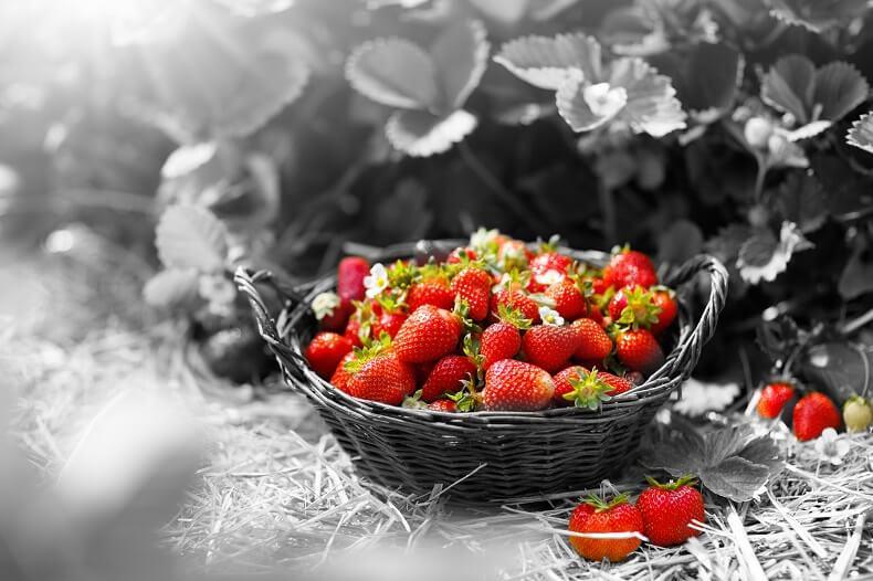 Basket of strawberries against monochrome background