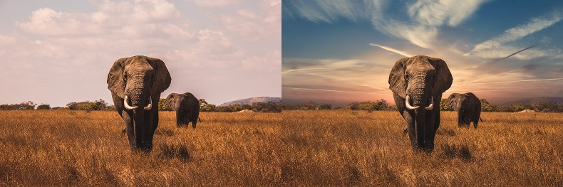 Elephant picture before and after AI sky replacement